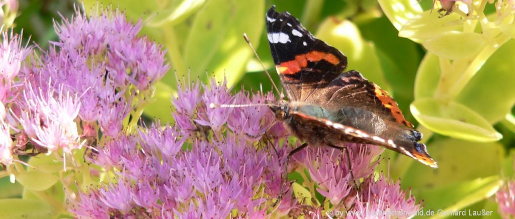 Bio Wellness Bayerischer Wald Land Vital