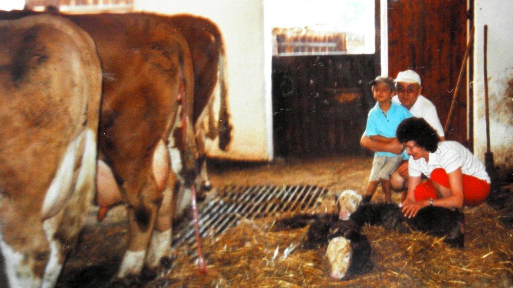 aubauernhof-familienferien-bayern-kuhstall-kaelbchen-geburt-miterleben