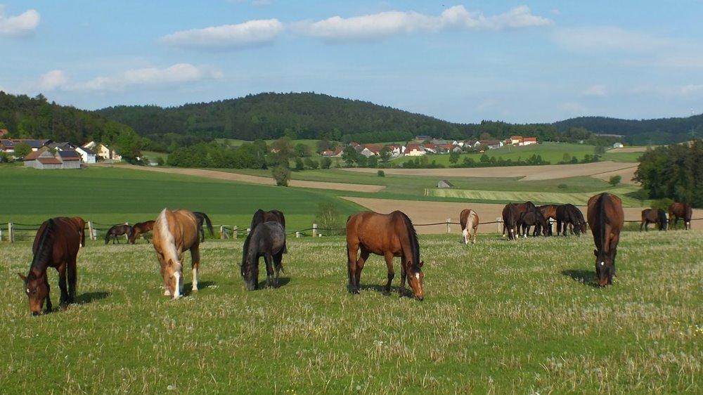 fuchsenhof-reitferien-oberpfaelzer-wald-pferde-weide-ausreiten