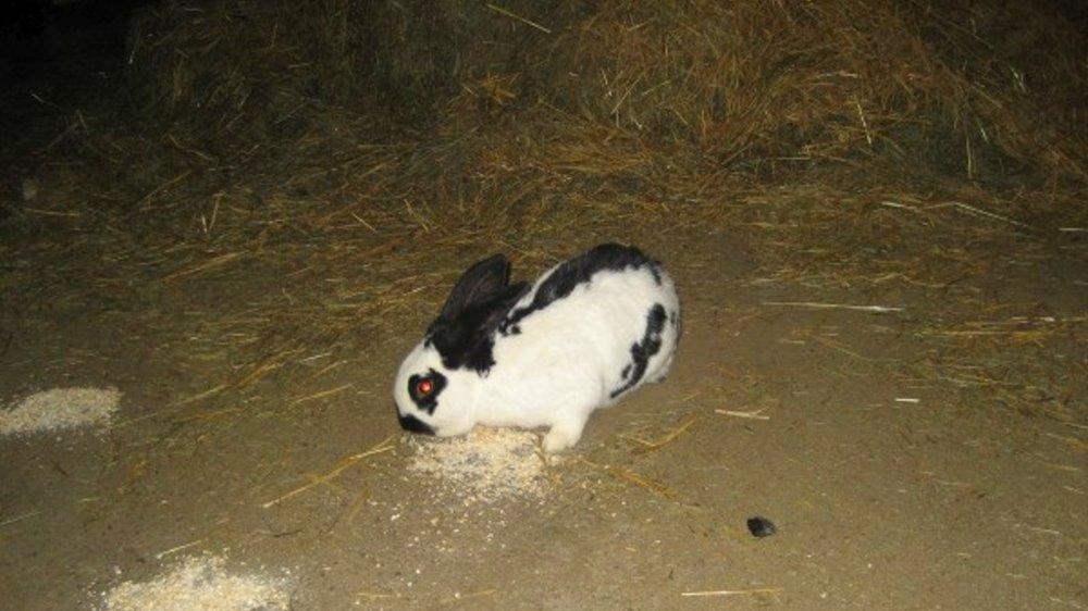 schneider-bauernhofurlaub-streichelzoo-hasen-kaninchen-streicheln