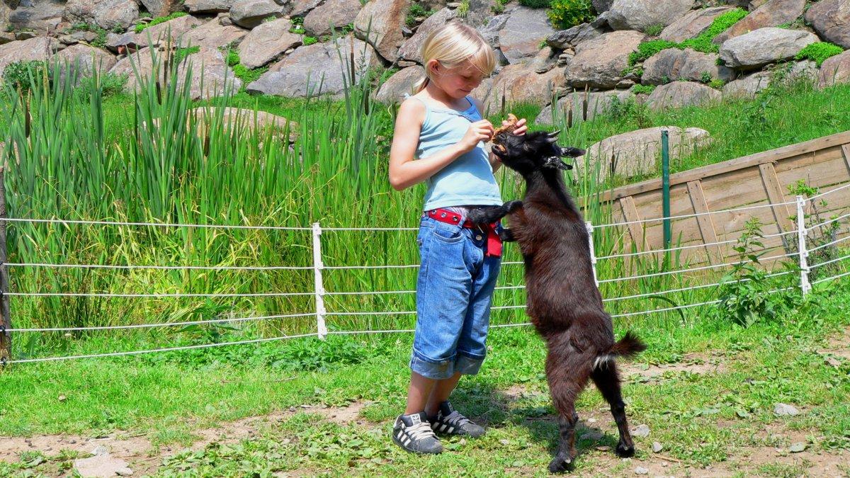 richards-berghuetten-kinder-familienurlaub-bayern-ziege-streicheltiere
