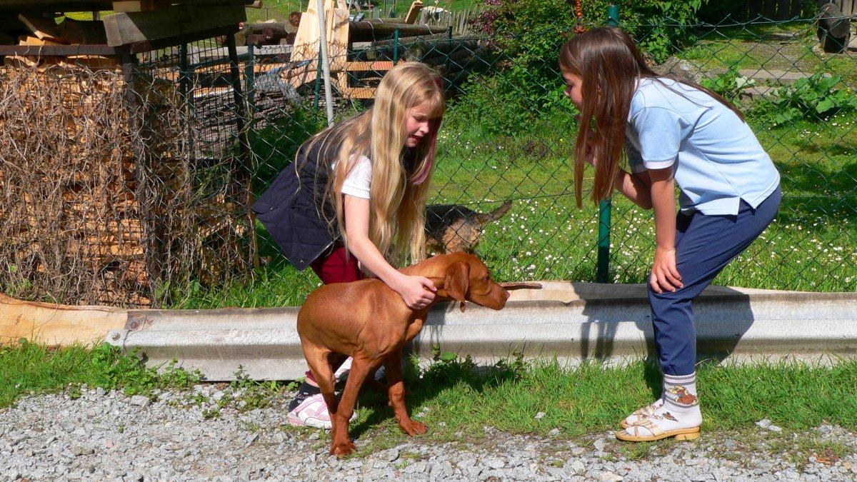 richards-berghuettenurlaub-mit-hund-deutschland-kinderfreundlich