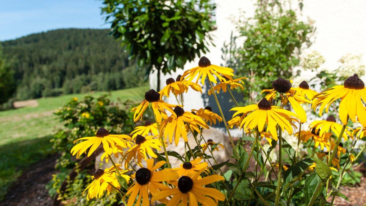 asbachtal-komfortferienhaus-bayerischer-wald-bodenmais-blumengarten
