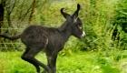 eselhof-niederbayern-tierisch-gute-wanderreisen-eseltouren