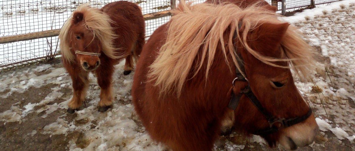 weber-barke-ferienwohnung-mit-pony-streichelzoo