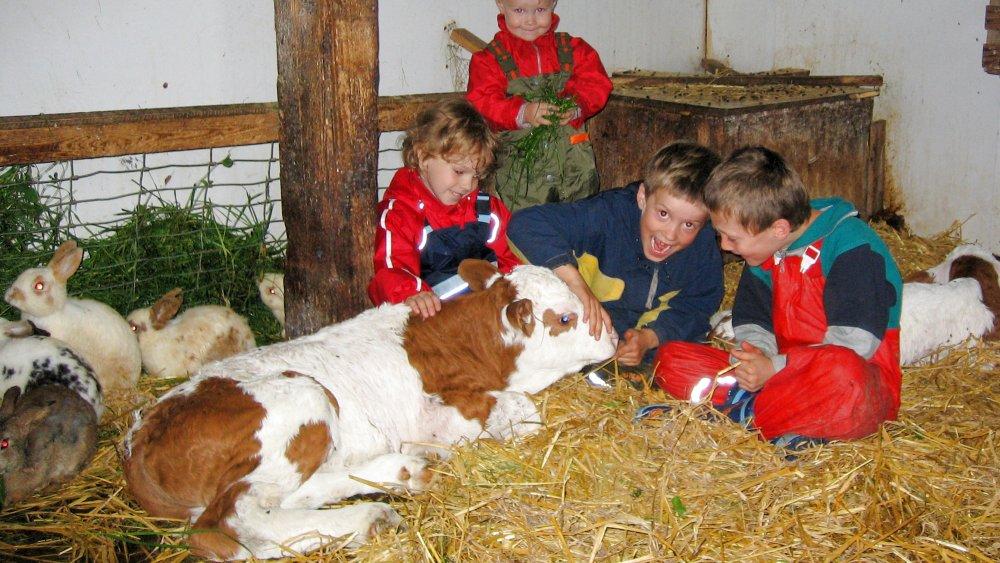 wieshof-bayern-biohof-kinderurlaub-tiere-kälbchen-streicheln