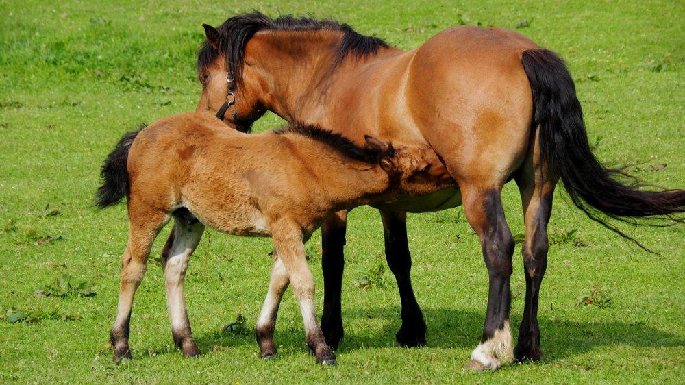 wieshof-biobauernhof-urlaub-in-bayern-tiere-pferd-fohlen