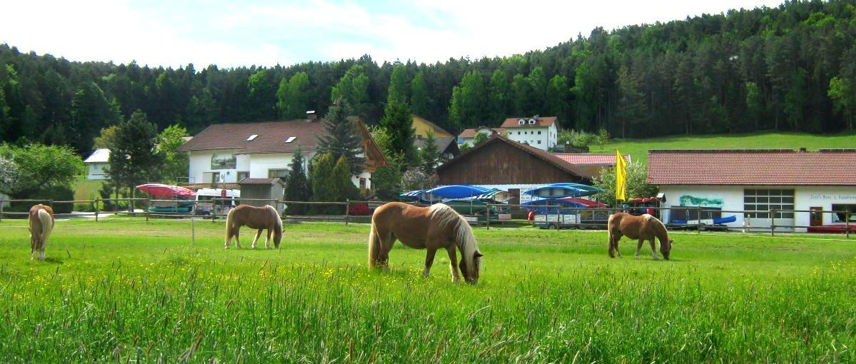 zankl-miltach-bayerischer-wald-pferdehof-bayern-reiten-ferienhof