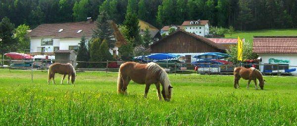 Bayerischer Wald Pferdehof in Bayern Reiten & Angeln